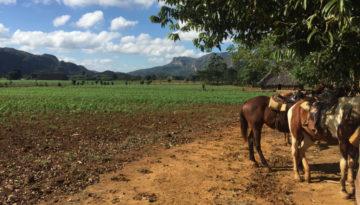 Hester ute på jordet